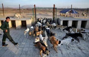 واکنش یک نماینده به بازگشایی «مدارس سگ» در تهران