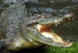 تمساح پرستی، یا انسان دوستی!